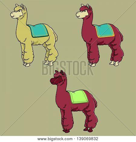 Vector illustration of 3 cartoon alpaca in different color