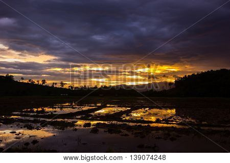 Rice field and sunset Background before raining in Thailand.