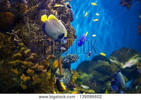 Colorful tropical fishes swimming in aquarium in oceanarium