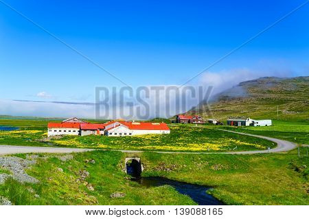 View of yellow flowers field and mountain at small village in Iceland