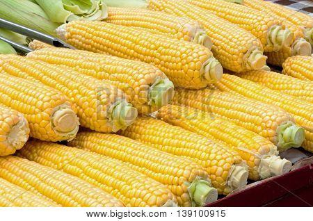Corn cob ready for sale at marketplace