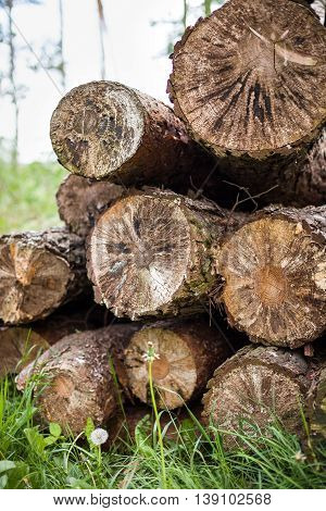 Pile of wood - texture background. Stack of wood. Cut old trees on the grass. Log fire wood in the yard. In early spring preparation of firewood for autumn and winter. Renewable resource of energy.
