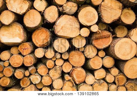 Cross section of the timber cut trees firewood stack for the background. Close up pile of logs background