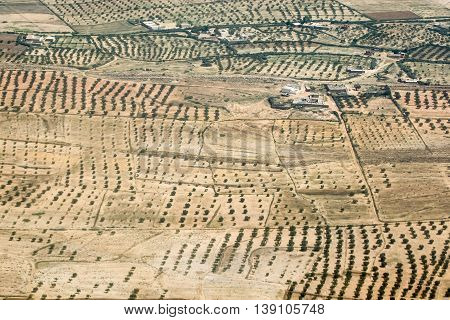 A birds eye view of an olive plantation in Tunisia.