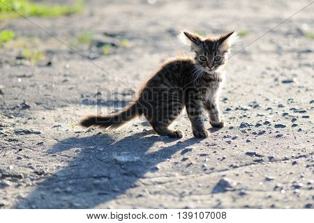 Frightened lonely tabby little kitten with shadow