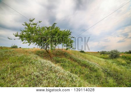 Landscape - the Lonely tree on the sea coast against the cloudy sky.