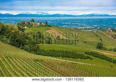 Vineyards Of Langhe, Piedmont, Unesco World Heritage
