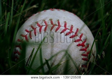 Baseball resting in the tall grass of the yard