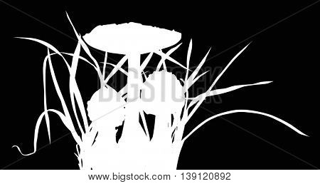 illustration with thee fly agarics in grass isolated on black background