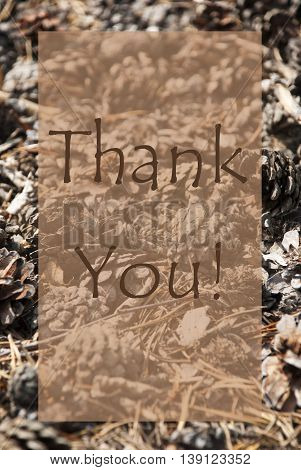 Vertical Texture Of Fir Or Pine Cone. Autumn Season Greeting Card With Copy Space For Free Text. English Text Thank You