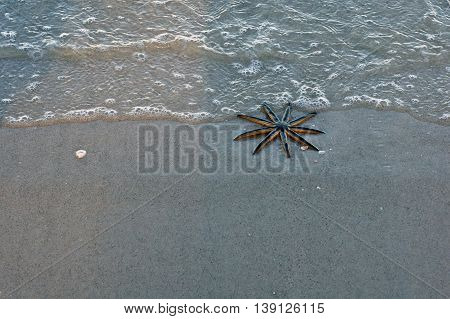 A live 9 legged starfish on Vanderbilt Beach in Naples Florida is at the edge of the gulf as a wave moves in.