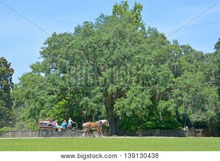 CHARLESTON SC USA JUNE 23 2016: Horse carriage tours Middleton Place is a plantation in Dorchester County, directly across the Ashley River from North Charleston, in the U.S. state of South Carolina.