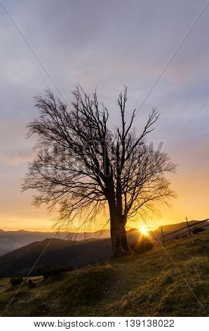 Old beech tree with bare branches. Setting sun in the mountains. Autumn landscape in the countryside