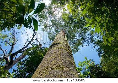Big tree on a rainforest in a blue sky