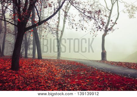 Autumn nature -foggy autumn view. Autumn alley in dense fog - foggy autumn landscape with bare autumn trees and red fallen leaves. Autumn alley in dense autumn fog. Soft focus applied.