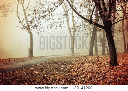 Autumn nature -misty autumn view of autumn park alley in dense fog - foggy autumn landscape with bare autumn trees and orange fallen leaves. Soft filter applied.