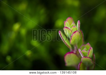 Macro photo of the coastal plant - pacific ocean