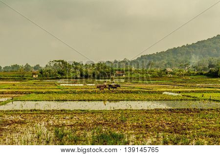A farmer on a cart in a field in rural Vietnam
