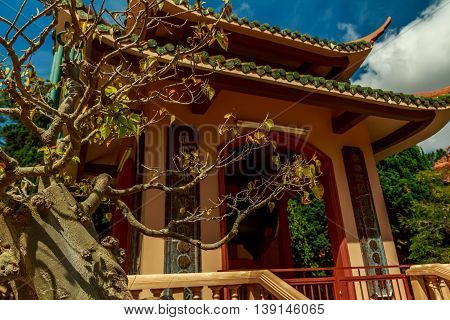 A gnarled tree in front of a temple in Vietnam
