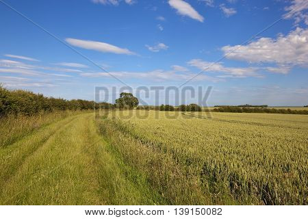 Bridleway And Wheat Field