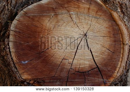 Round tree stump with shades of light brown wood surrounded by shades of dark brown wood with circular lines and an X-shaped crack