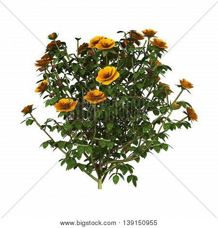 3D rendering of an orange rose bush isolated on white background