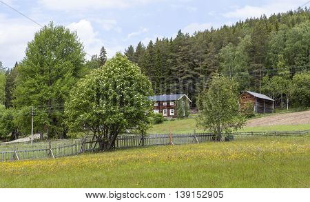 Wooden barn, homestead, timber building and wildflowers. Colorful environment in rural country. Farmland and plants, forest in the background.
