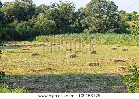 Agricultural landscape with hay bales in meadow