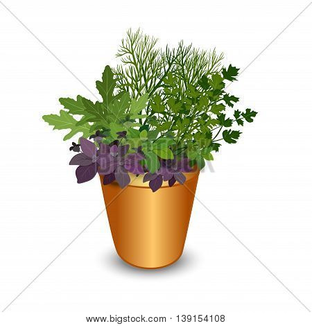 Isolated different herbs in a pot: bay leaves arugulabasilparsley and dill. Kitchen herbs on a white background vector illustration.