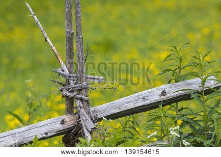 Wooden skill, how to handle naturally, old, wooden bars into a wooden fence to keep wild animal out.
