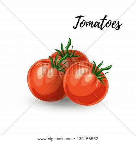 Vector illustration of ripe red fresh tomato isolated on white background