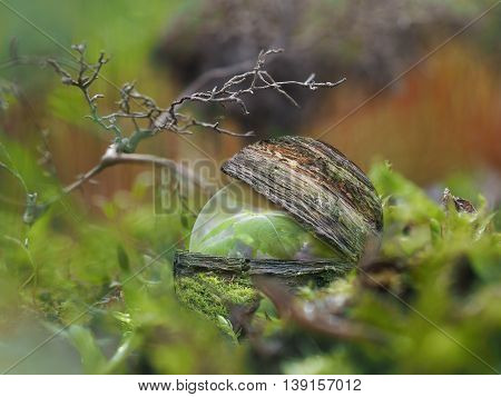 Transparent sphere with plant inside a cocoon of wood in the forest under the lichen. The concept of environmental protection the environment the protection of forests