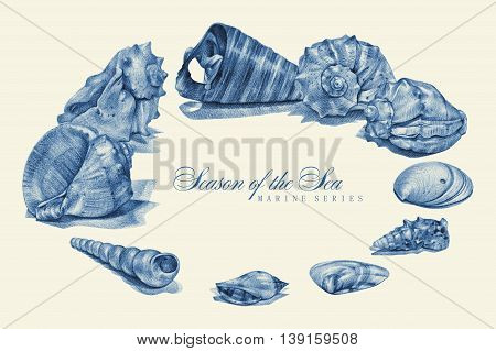 Illustration with seashell drawn by hand with pencil. Pencil sketch academic drawing. Place for text. Summer sea theme