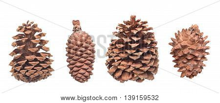 Set of fir cones isolated on white background