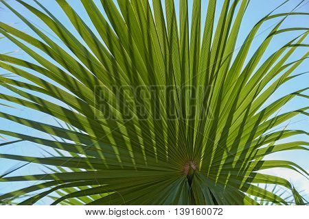 Dancing shadows of a palm leaf against the blue skyLeaf of a palm