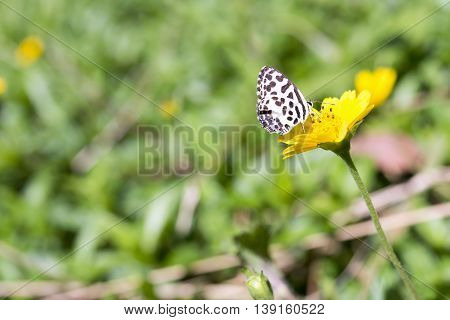 The butterfly on the yellow flower in the garden.