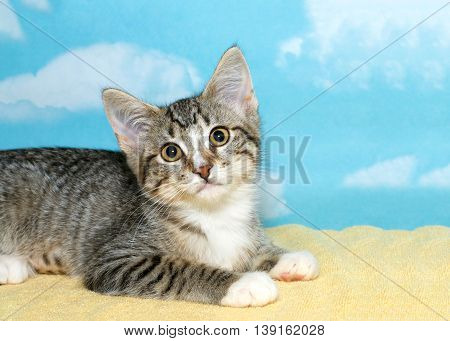 gray and white tabby kitten laying on a yellow blanket looking up hopefully blue background with white clouds Copy space