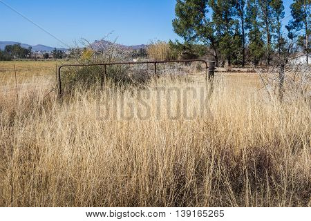 Long grass overgrown farm gate to horse enclosure in South Africa
