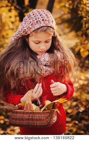 happy child girl in knitted scarf and sweater with basket on autumn walk in forest eating apples. Fall harvest cozy mood.