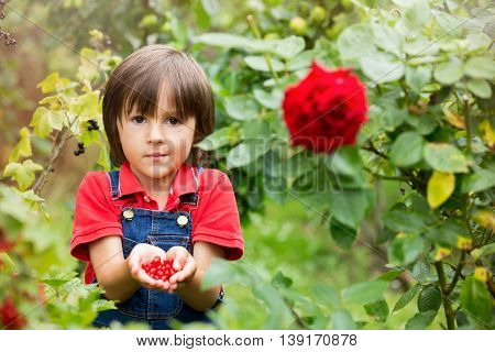 Adorable Little Boy, Holding Red Currants In A Garden