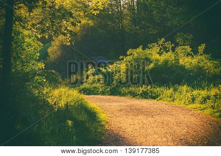 Enchanted fairy forest with summer green trees and walking road, sunny natural rural vintage landscape