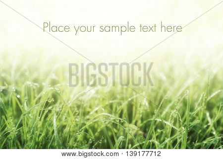 Natural abstract soft green eco sunny background with grass and copy space for text with sample