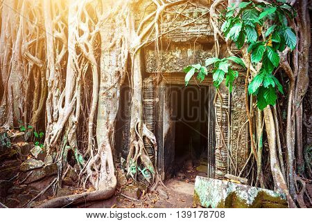 Ta Prohm Temple Angkor Cambodia. Ancient archaeology