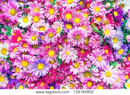 Bright picture of background full of color flowers. Abstract background of flowers. Flower bouquets. Bunch of flowers.