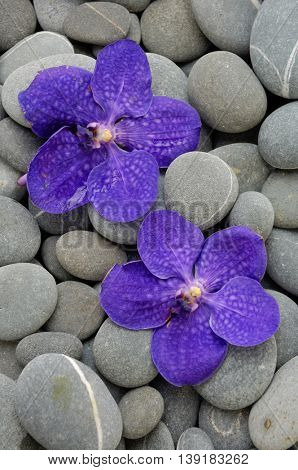 Purple orchid on gray pebbles background