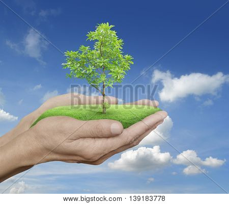 Growing green tree in hands over blue sky with white clouds Environment concept