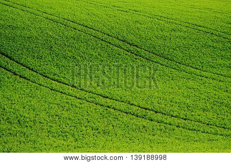 Green grass fields  suitable for backgrounds or wallpapers, natural seasonal landscape. Southern Moravia, Czech republic