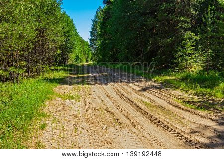 Dirt road in the forest a sunny summer day