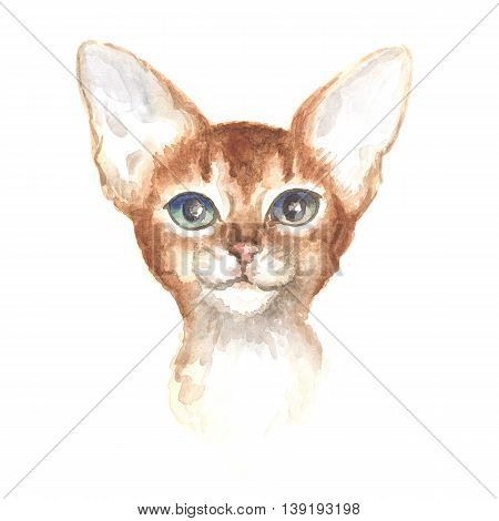 head of the Abyssinian kitty. Image of a thoroughbred cat. Watercolor painting.
