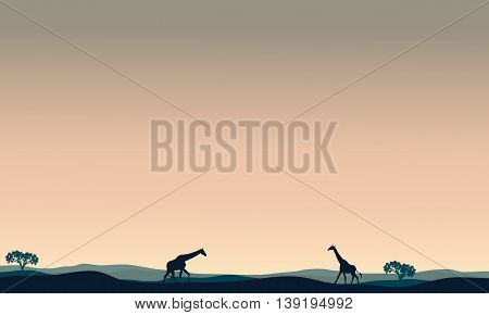 Landscape giraffe at afternoon silhouettes vector illustration